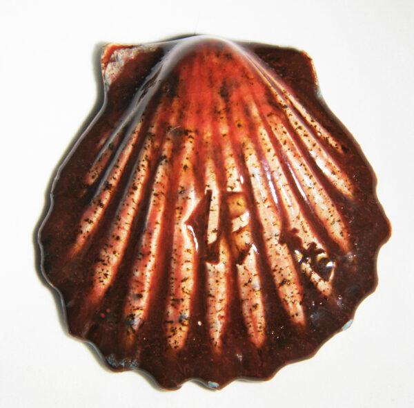 GL-5014 schelp 2
